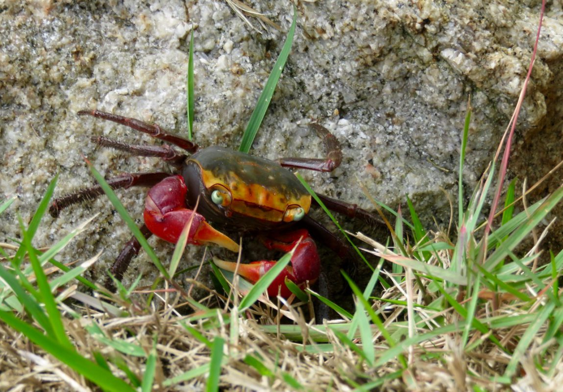 Krabbe in Hiroshima