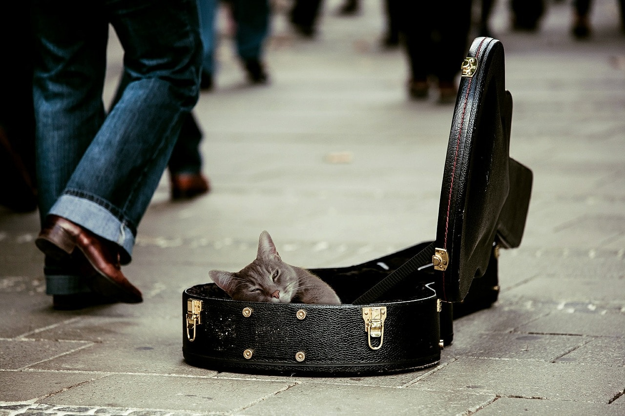 cat donation